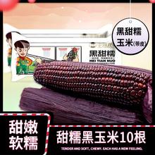 李豫龙 黑糯玉米新鲜 甜玉米棒黏玉米东北粘玉米粒非转基因10根
