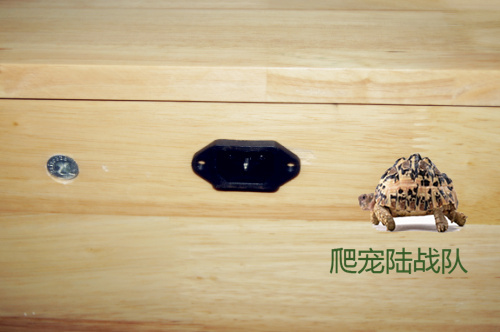 Lu Guixiang/pine/oak/bin wood reptile boxes crates, custom DIY European-standard three-wire and connector