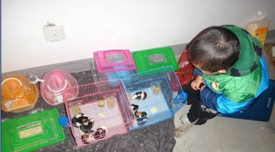 Dutch rabbit cage guinea guinea pig cage Nine Inch pet rabbit cage rabbit cage squirrel cage transport