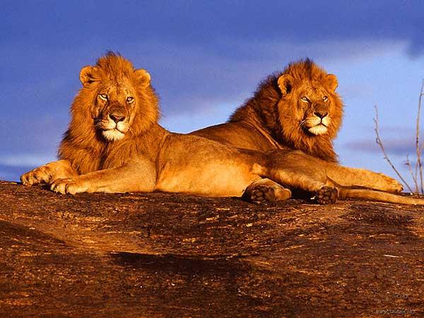 非洲旅游肯尼亚迪拜尊贵纯玩11日游 直观动物大迁徙 成都出发特价